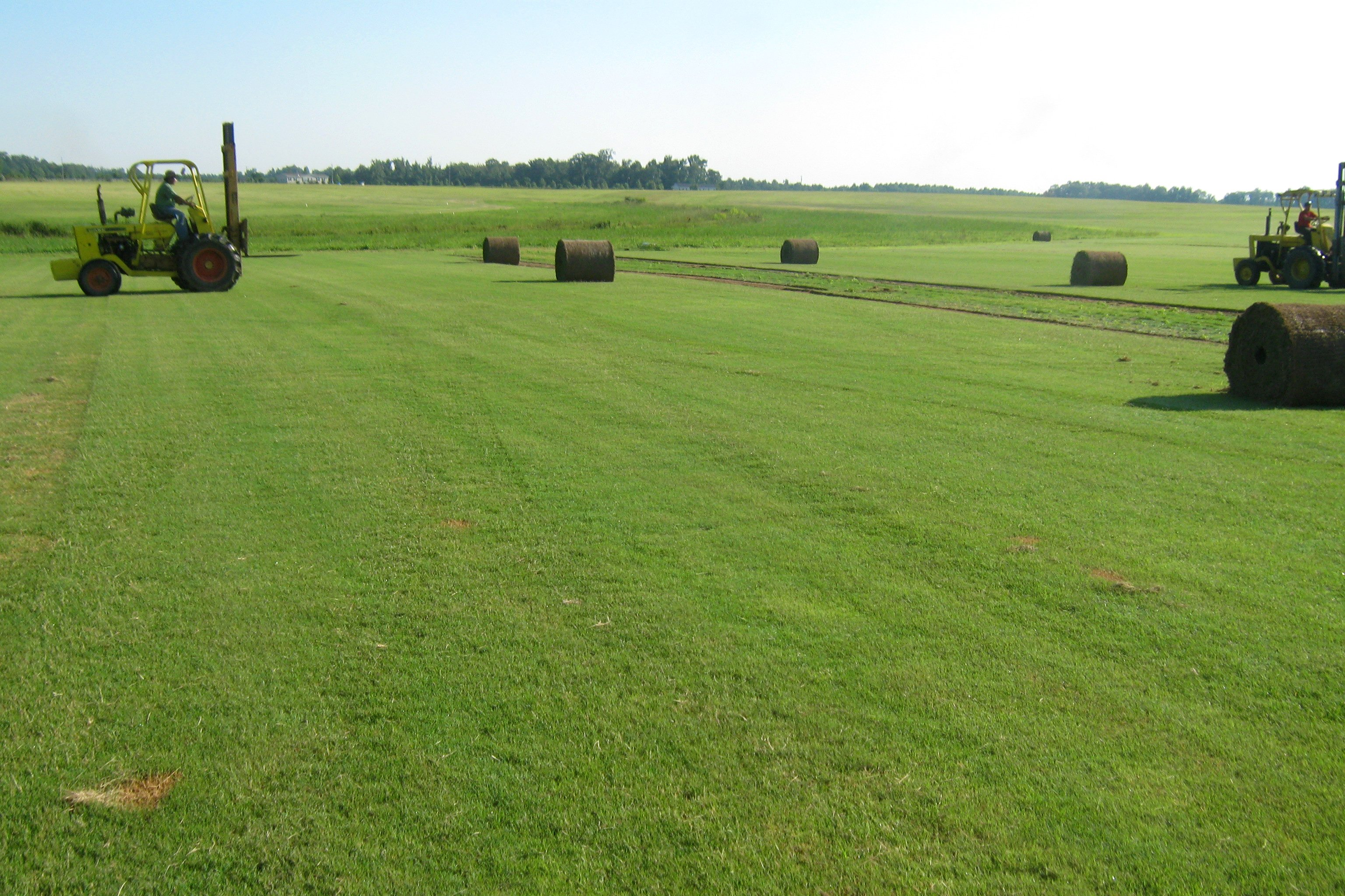 If you're tired of mowing, watering, fertilizing & working all season long to stay Exclusive Offers · Organic Products.