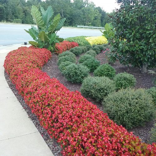 Epps Bridge Centre parking lot landscaping