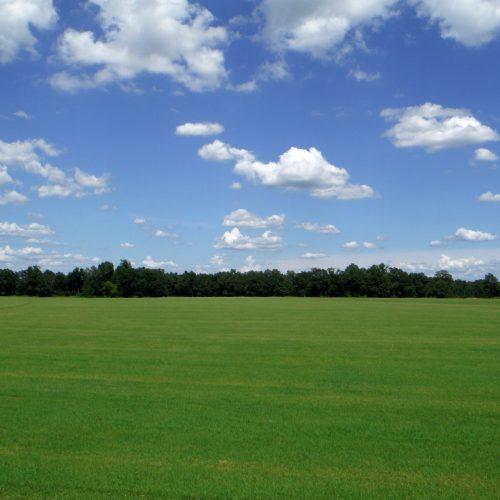 turf farm on sunny day