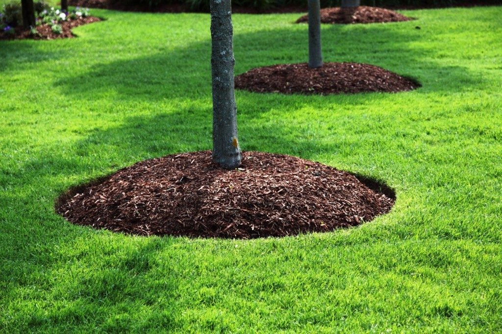 Tips When Mulching