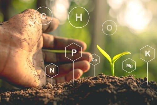 pH Level in Soil